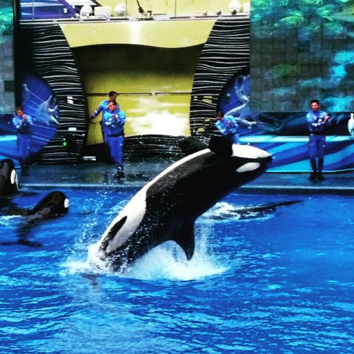 SeaWorld One World Show