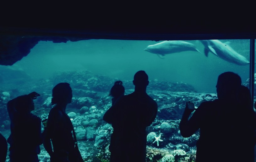 SeaWorld Underwater Dolphin Viewing