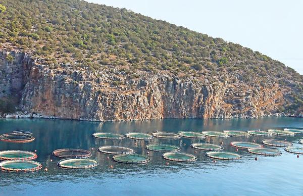 aquaculture major